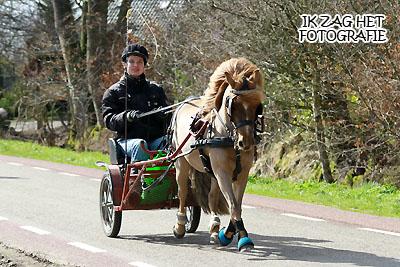Paardenvertier 2013